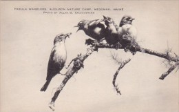 Parula Warblers Audubon Nature Camp Medomak Maine Artvue - Scouting