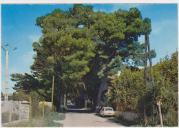 CAROMB - L'allée Des Pins, Arrivée De Carpentras - France