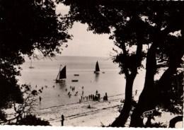 85----NOIRMOUTIER----paysage Au Bois De La Chaize---voir 2 Scans - Ile De Noirmoutier