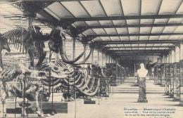 Bruxelles Musée Royal D'histo Naturelleire Gl1908 #D2953 - Zonder Classificatie