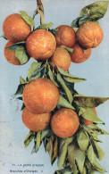 Cpa La Cote D'azur , Une Branche D'oranges.......... - Cultures