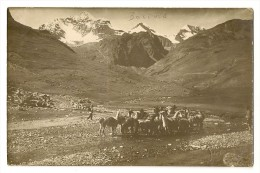 S2646 - Troupeau De Lamas - Bolivie