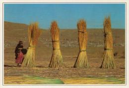 PERU'  PUNO: CANNE X LA FABBRICAZIONE DELLE BARCHE      (NUOVA  CON DESCRIZIONE DEL LUOGO SUL RETRO) - Perù