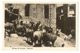 S2655 - Groupo De Llamas - Bolivie