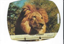 Autocollant Année 1973 Les Amis De Daktari Clarence Le Lion Fromageries Bel - Autocollants