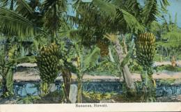 ETATS UNIS(HAWAII) BANANE - Etats-Unis