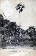 Majunga. Rofias Et Sahatrauas - Madagascar