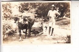 PILIPINAS / PHILIPPINEN, Bauern-Fahre Auf Den Philippinen, Wasserbüffel, Photo-AK - Philippinen