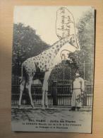 Paris - Jardin Des Plantes - La Girafe Menelik - Parques, Jardines