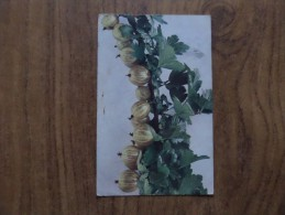 43410 POSTCARD: FLOWERS: Ribes Grossularia - Stachelbeere (Fruheste Gelbe). - Unclassified