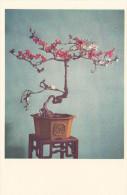 Ph-CPSM Jardins En Miniature (Chine) Cognassier à Cinq Couleurs - Chine