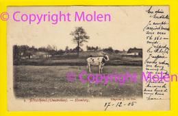 Topper Omstreken HOMBERG Te MEERHOUT Uitg Jos Le Bon Bougaerts * Verzonden In 1905 => Cureghem Anderlecht 4139 - Meerhout