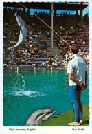AK Tier Delphin Delfin Dolphin Orlando Sea World San Diego Delfino Dauphin Bete USA United States Of America Florida - Dauphins