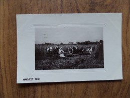 43484 POSTCARD: AGRICULTURE: Harvest Time. UNKNOWN LOCATION. REAL PHOTOGRAPH. - Cultivation
