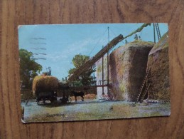 43485 POSTCARD: AGRICULTURE: Haymaking. UNKNOWN LOCATION. - Cultivation