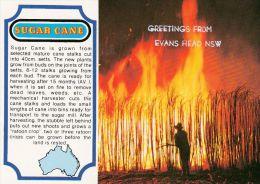 1 AK Australien * Story Card Sugar Cane * - Australie