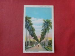 > Cuba  Havana --- Royal Palms Avenue    Ref 1751 - Cuba