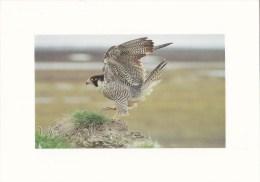 CPM Faucon Pélerin - Pájaros