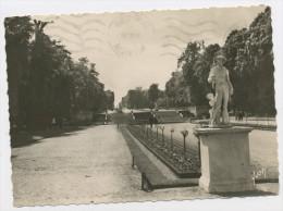 CPM: 92 - SAINT CLOUD  -  LE PARC , L'ALLÉE DES MARNES - Saint Cloud