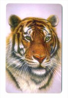 Russia Kubtelecom Krasnodar Cats 5 100 Units Amur Tiger - Russia