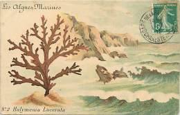 Ref F506- Mer -les Algues Marines - Halymenia Lacerata - Dessin Illustrateur  - Carte Bon Etat  - - Sin Clasificación