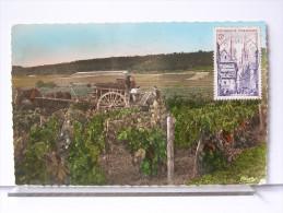 EN VENDANGE - ANIMEE - ATTELAGE - CHEVAL - Vines