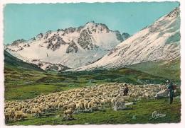 38 - Troupeau De Moutons - Editions Des Beaux Sites Dauphinois - Tampon Et Flamme Val D'Isère 1962 - Francia
