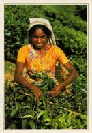 SRI-LANKA:  RACCOLTA  DEL  TE    (NUOVA CON DESCRIZIONE DEL SITO) - Sri Lanka (Ceilán)
