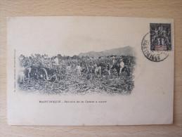 Martinique - Récolte De La Canne à Sucre - Martinique