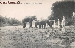 ELEPHANTS A KADOGUSTOTA SRI LANKA CEYLON INDIA INDE - Sri Lanka (Ceylon)