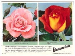Original Werbung / Reklame - 1959 - Rosen , W. Hauenstein In Rafz , Blumen , Blumenhaus  !!! - ZH Zürich