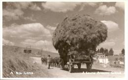 A SOUTH AFRICAN SCENE A BIG LOAD RARISSIME TOP CARTE EDIT.H.M SWAN & Co NON CIRCULEE TBE GECKO - Postkaarten