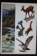 Hunting Chasse -  OSPREY  , BIRD, - Soviet  Postcard 1977 - Oiseaux