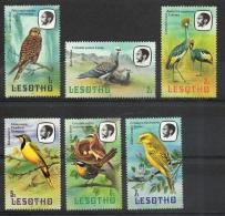 Lesotho 1981 - Uccelli Birds MNH ** - Lesotho (1966-...)
