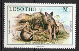 Lesotho 1984 - Sciacallo Dalla Gualdrappa Black-backed Jackal MNH ** - Lesotho (1966-...)