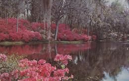 Ph-CPSM EtatsUnis Charleston (SC South Carolina) Middleton Gardens, Petit Format - Charleston