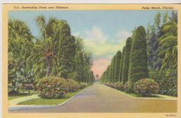 C5-AUSTRALIAN PINES AND HIBISCUS- PALM BEACH FLORIDA -161- - Palm Beach
