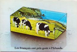 Les Français Ont Pris Goût à L'Irlande - Irlande