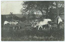 Lezat Sur Leze Paysan Avec Ses Vaches - Lezat Sur Leze