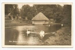 I2938 The Swans At Hatherop - Cigni Cygnes / Viaggiata 1961 - Inghilterra