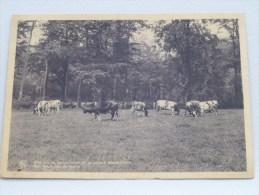 Franciscanessen Mission.....Noviciaat Te Gooreind Een Weide Van De Hoeve ( Thill ) Anno 1947 ( Zie Foto Voor Details ) ! - Wuustwezel
