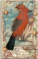 5967 ART ARTE BIRD REAL WITH FEATHERS YEAR 1905 POSTAL POSTCARD - Schone Kunsten