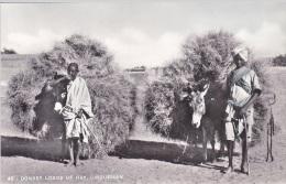 DONKEY LOADS OF HAY OMDURMAN - Sudan