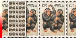 Rwanda 0859**  20c  Singes - Feuille / Sheet de 40 MNH