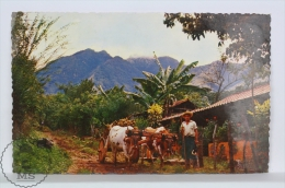 Vintage 1950´s Costa Rica Postcard - Tipical Scene In Mountain Of Costa Rica With Farmer´s Home And Ox- Cart - Costa Rica