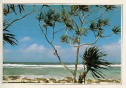 VANUATU:  UNA SPIAGGIA DELL'ARCIPELAGO      (NUOVA CON DESCRIZIONE DEL SITO SUL RETRO) - Vanuatu