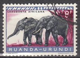 Ruanda-Urundi, 1959/61 - 8fr Elephants - Nr.147 Usato° - Ruanda