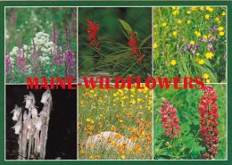 Wildflower From Maine