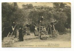 Carte Postale Ancienne Gard Villeneuve Les Avignon 1914 En Provence La Cueillette Des Olives L´Olivado - Villeneuve-lès-Avignon