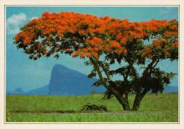 ZONA MERIDIONALE DELL'ISOLA MAURIZIO      (NUOVA CON DESCRIZIONE DEL SITO SUL RETRO) - Mauritius